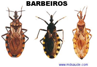 Babeiro (1)